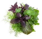 www.eatgreens365.com