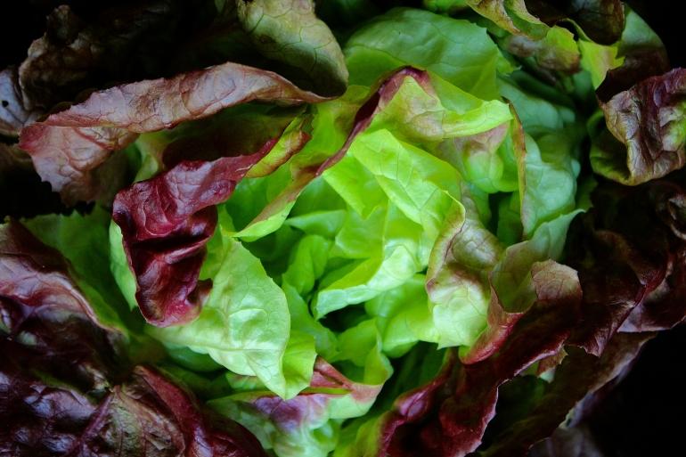 Spring Green Lettuce